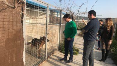 Photo of IU insta al gobierno municipal a renovar el convenio con Arca de Noé para continuar con la aplicación del método CER en las colonias de gatos