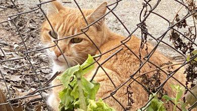 Photo of IU insta al Gobierno municipal a que impulse un nuevo convenio para la aplicación del método CER en las colonias de gatos
