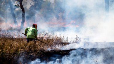 Photo of Ana Naranjo exige que se extremen las medidas contra incendios en Córdoba en un verano más caluroso y más poblado en zonas rurales