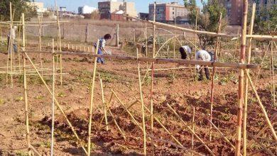 Photo of IU exige al gobierno de Bellido que no abandone el proyecto de huertos urbanos