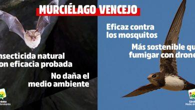 Photo of Medio Ambiente | IU propone repoblar colonias de aves y murciélagos para combatir a los mosquitos