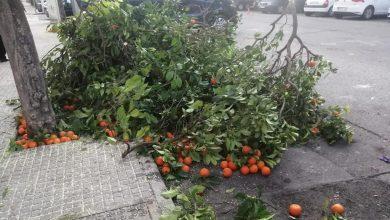 """Photo of IU denuncia la """"mala planificación"""" del gobierno municipal en la recogida de la naranja"""